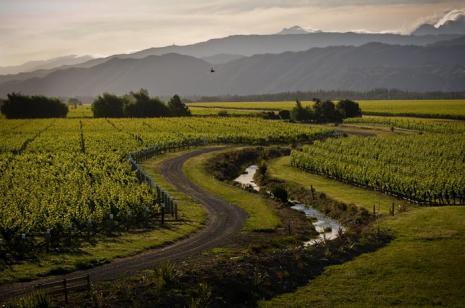 Conders Bend Viticulture Development - Marlborough
